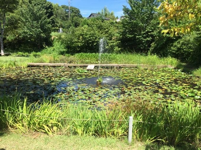 柿山田のザリガニ池
