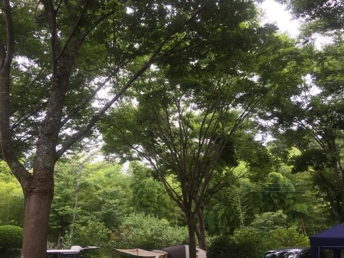 柿山田の木漏れ日