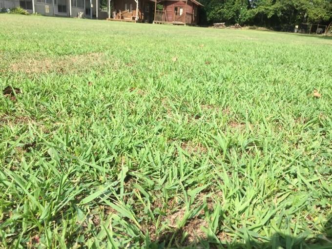 サイトは芝生