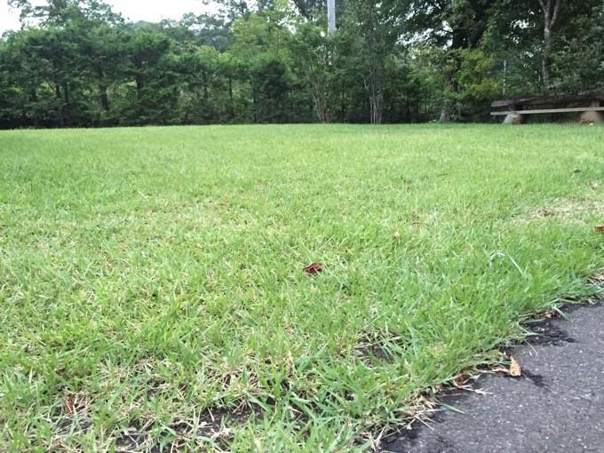 フカフカの芝生