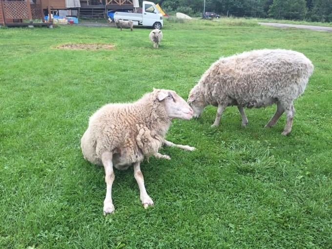 羊さんさようなら