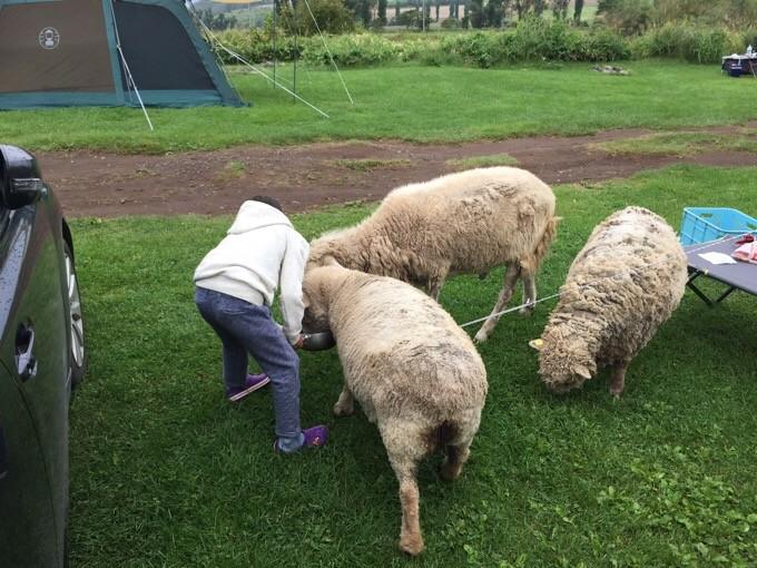 羊さんのお見送り