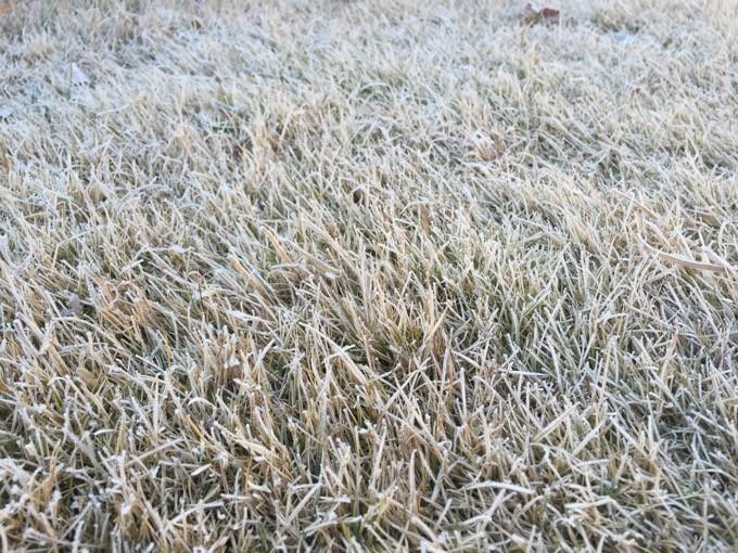 芝一面に霜が降りる