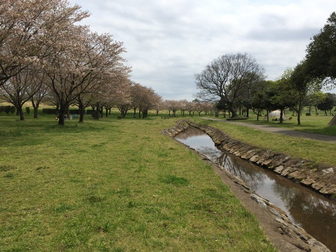 NSPの桜と小川