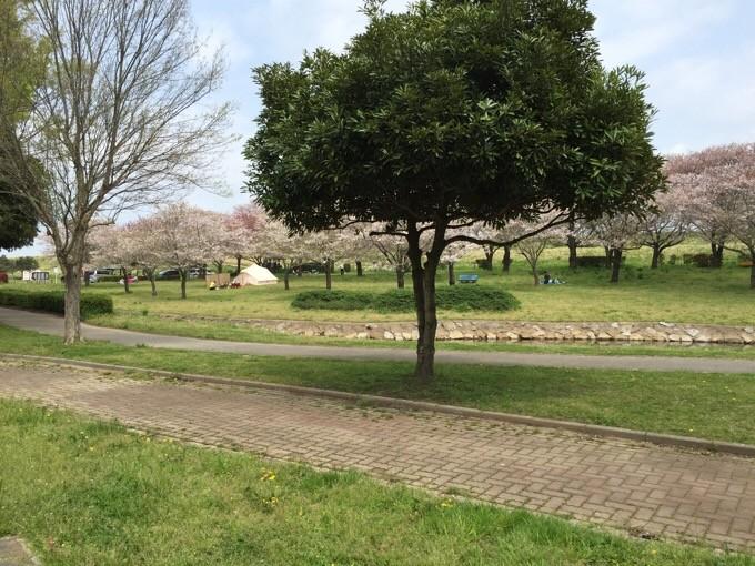 NSP桜並木