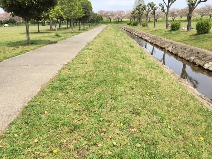 NSPの小川と歩道