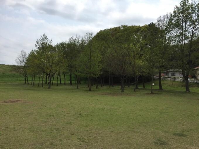 NSP小広場奥の木々