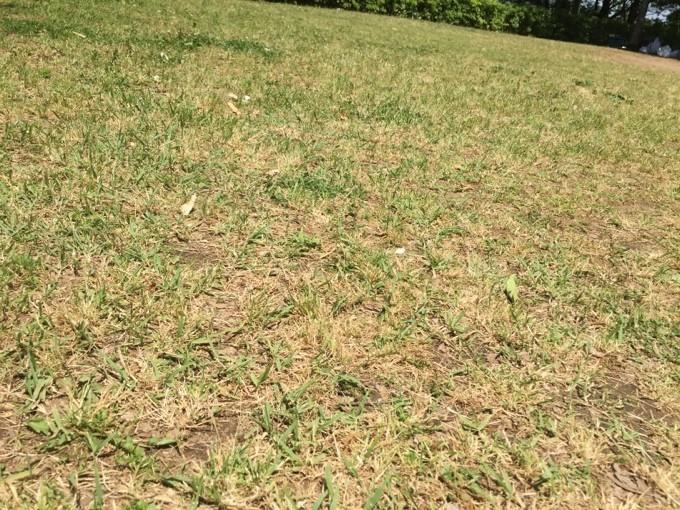 坂田ヶ池キャンプ場の地面