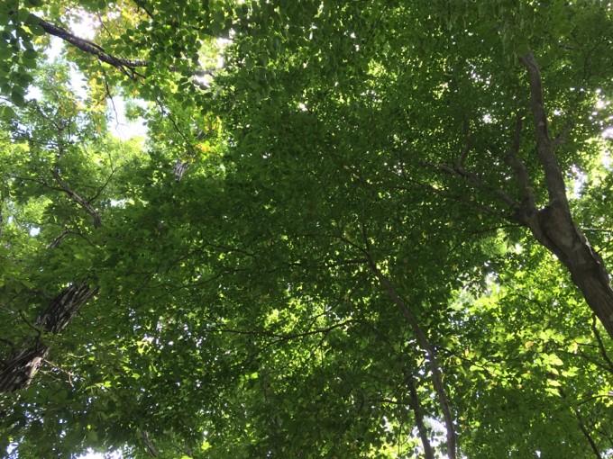 メープル那須高原の木漏れ日