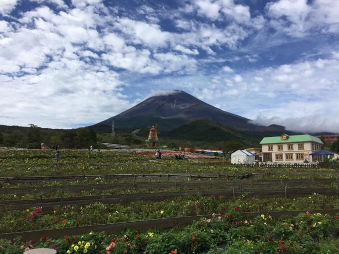 ダリアと富士山