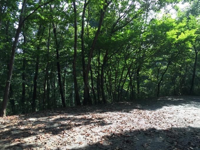 グリーンエリアの林間サイト