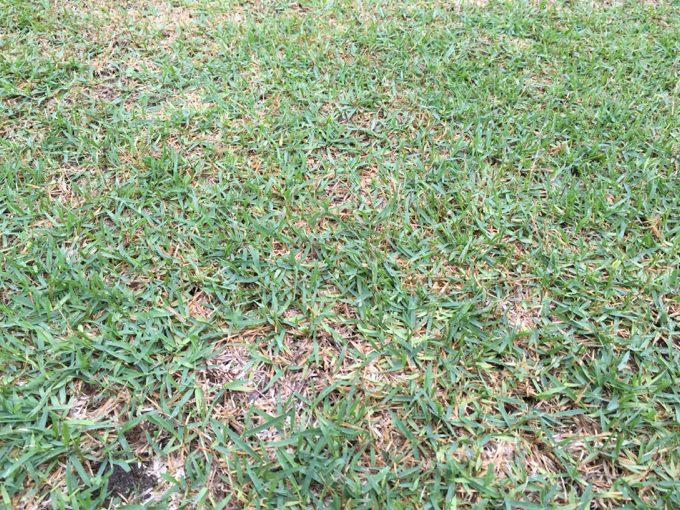 大子グリンヴィラは細かい砂利敷きに芝生