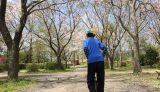 イレブンオートで桜散り去るお花見キャンプ