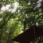 猛暑を涼しく過ごす!富士山麓の林間サイトで賑やか連泊キャンプ