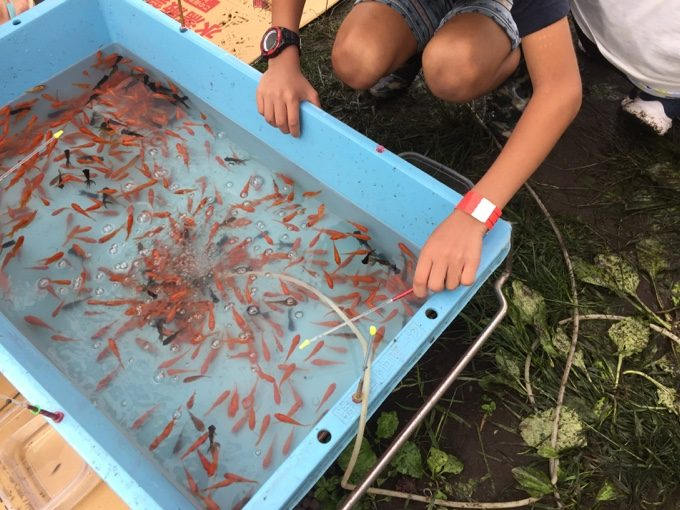 マルキユーの金魚釣り大会の決勝戦