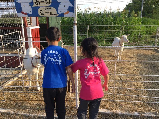 カントリーファーマーズ藤田牧場で羊と戯れる