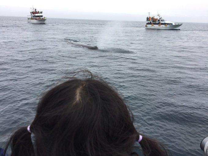 根室海峡でマッコウクジラに遭遇