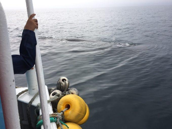 マッコウクジラがあまりに近くに浮上していてビックリ