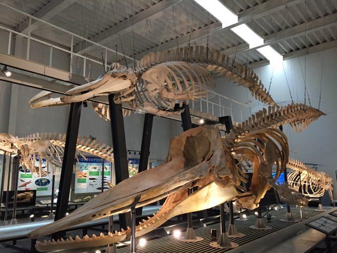足寄動物化石博物館の恐竜展示