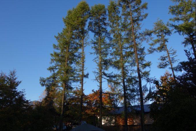 秋のスウィートグラスの晴れた朝