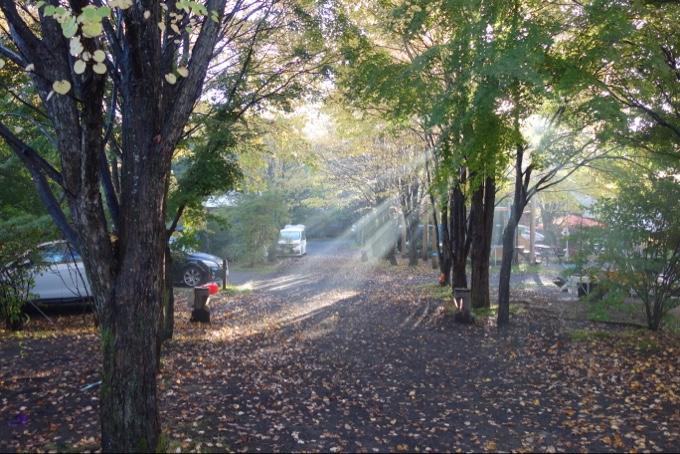 スウィートグラスの朝の木漏れ日が美しい