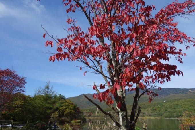 バラギ湖周辺の紅葉は徐々に見頃に