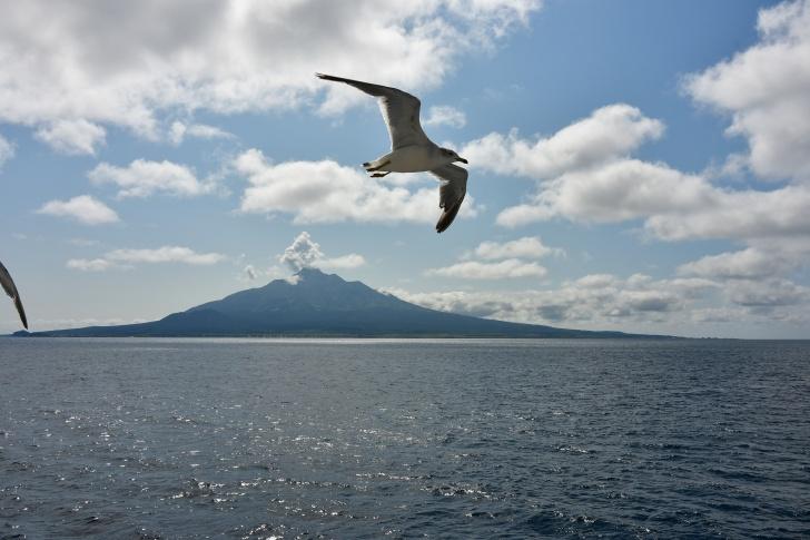 ハートランドフェリーから撮る海鳥と利尻富士