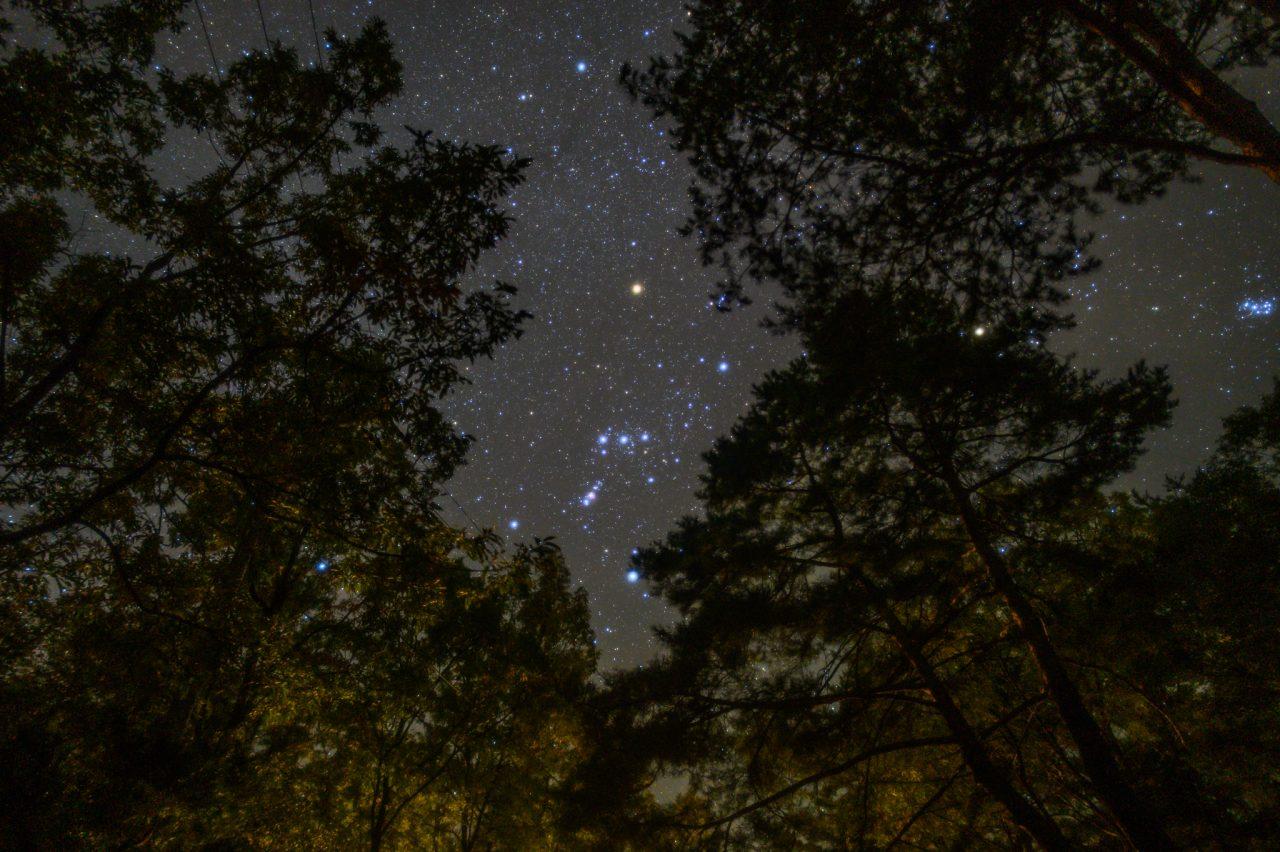 木々に囲まれた林間サイトから見上げるオリオン座